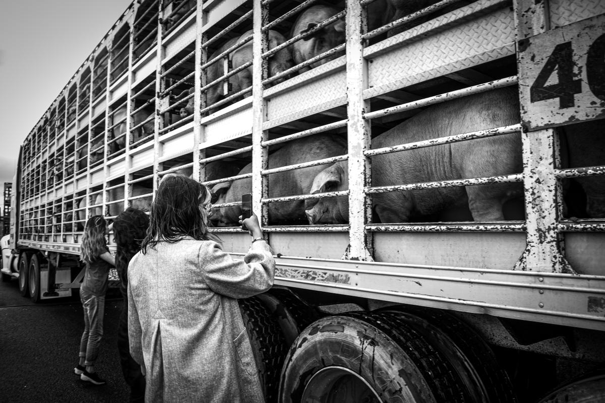 De mujeres y animales: el feminismo antiespecista en el centro-periferia